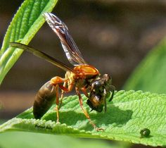 Olhares do avesso: Só passam... não há marimbondos, existem vespas que picam e sobrevivem para picar mais. poesia. comente fomente compartilhe.