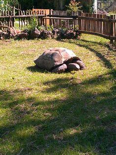 Dickerson Park Zoo, Springfield, MO  :)