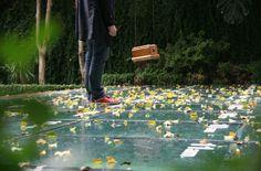 Ezequiel Montero Swinnen, Probabilidad de otoño en los próximos dos días, Intervención en sitio específico, Centro Cultural Coreano para América Latina - Cofre, algo en su interior, números en vinilo blanco sobre estructura vidriada que cubre pileta, hojas caídas y por caer. - 2010. Bisagra arte contemporaneo