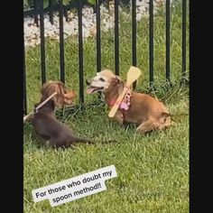 Cute Funny Dogs, Cute Funny Animals, Funny Kids, Weenie Dogs, Pet Dogs, Dog Cat, Cute Stories, Funny Dog Videos, Cute Animal Videos