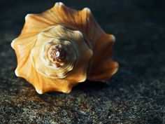 fractals in nature - Google Search