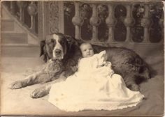 Cabinet Card c. 1890  The dogs face tells it all: Don't come any closer!