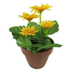 Singing & Dancing Daisy Flower Pot - Sonic Control Novelty Item (Toy) http://www.amazon.com/dp/B005F5PSKM/?tag=dismp4pla-20