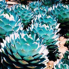 Immagine di cacti, iphone, and tumblr