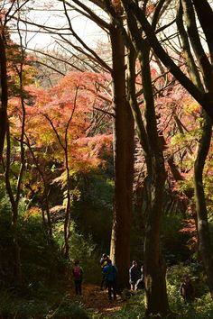 鎌倉・獅子舞の紅葉 Autumn leaves in Shishimai(Lion-dance),Kamakura,Japan