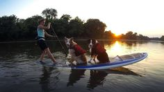 pups. PC: M. Schultz okay if she can paddle with 2 large breed dogs I can paddle with my great dane!