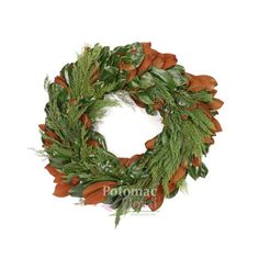 "Magnolia Wreath with Evergreens, 24"" Outer Diameter - Potomac Floral Wholesale"