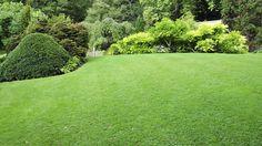 Een mooie tuin met vele tinten groen. Van het gazon en coniferen tot aan de blauwe regen.