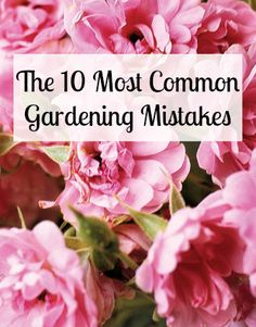 Read this before you set foot in your garden.