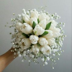 Wonderful Cost-Free Tulip bouquet Style Extensive survive the tulip ! Vegetable that vibrant colored gem cell phone a beautiful show during the earl Tulip Bouquet Wedding, White Tulip Bouquet, Small Wedding Bouquets, White Tulips, Bride Bouquets, Bridal Flowers, Floral Wedding, Bridal Bouquet White, Flower Arrangements