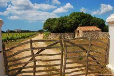 Celler Solano, Sant Climent, Menorca -1185 by MARIA ROSA FERRE, via Flickr #menorca #menorcamediterranea