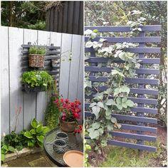 Old fence DIY espalier