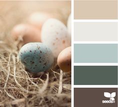 I haven't been on design-seeds in a while, but I'm enjoying catching up on all their great posts. I like the softness of these colors - not to mention - pale blue and a rich brown is one of my favorite combinations!