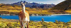 Le Parc national de Torres del Paine, d'une surface de 242 000 hectares, est considéré comme le plus beau du pays avec ses steppes jaunes, ses sommets immaculés, ses lacs couleur émeraude, ses cascades et ses forêts brunes - #easyvoyage #easyvoyageurs #clubeasyvoyage #terresdevoyages #travel #traveler #traveling #travellovers #voyage #voyageur #holiday #tourism #tourisme #chili #ameriquedusud #southamerica #torresdelpaine #nature