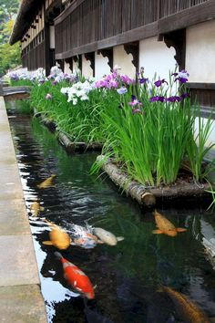 Fish pond gardens - Most Popular Pond and Water Garden Ideas For Beautiful Backyard 48 – Fish pond gardens Koi Pond Design, Landscape Design, Garden Design, Fish Pond Gardens, Koi Fish Pond, Koi Ponds, Fish Garden, Tropical Garden, Small Water Gardens