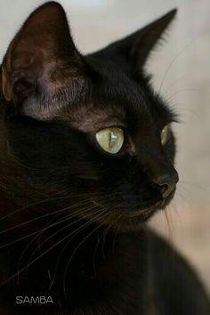 20 ideas for cute cars illustration beautiful Pretty Cats, Beautiful Cats, Animals Beautiful, I Love Cats, Cool Cats, Black Cat Art, Black Cats, Animals And Pets, Cute Animals