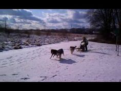 TO TRY DRIVING A DOG SLED WHERE IT'S DONE NATURALLY & RESPECTFULLY!