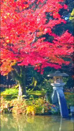 Red foliage and Kotoji lantern at the Kenroku Garden, Kanazawa, Japan