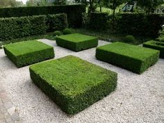 "Box hedges: flat ""tiles"" of box to fill a small garden or court yard"