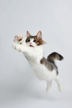 jumping!!