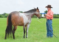 Downunder Horsemanship | Training Tip of the Week: The best place to desensitize your horse to water.