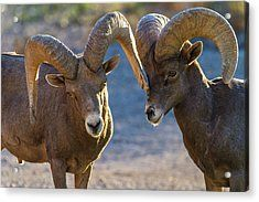 In Your Face Acrylic Print by James Marvin Phelps