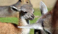 Zoo de bébé Animaux | Popsugar Animaux