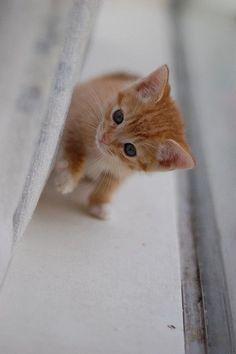 """An inquisitive little kitten is the best   reminder of what youth is about."" -- Jo Kittinger #cutekittenpictures #Flickr #adorablekitten #kittenlove"