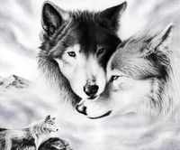... Wolf Couple ...