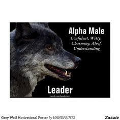 Grey Wolf Motivational Poster for Alpha Males Men Quotes, Strong Quotes, Wisdom Quotes, Quotes To Live By, Life Quotes, Sport Quotes, Quotes Positive, Alpha Male Quotes, Lone Wolf Quotes