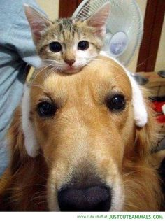 """15.) """"I'm going to be your hat for today if that's cool with you."""""""