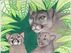 Endangered Species Day art contest 6-8 grade category semi-finalist: Yejin Lee, Age 14, Florida panther