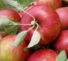 Busuioace cu miez roşu | Zdravăn Apple, Paradis, Green, Plant, Apple Fruit, Apples