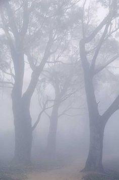 Background for birdcage - foggy forest