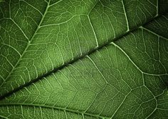 Plant texture background for different uses Stock Photo - 12774192