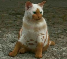 Weird colorful Cat