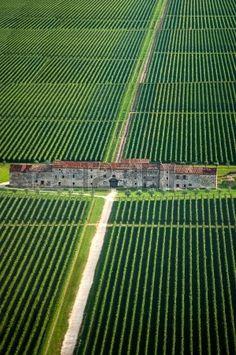 Fields of vines and old county house in Veneto, Italy - photo by Alberto Masnovo, via 123RF Stock Photos