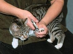 How to trim a cat's claws step-by-step article with excellent pictures.