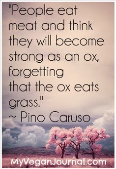 People eat meat and they think they will become strong as an ox, forgetting that the ox eats grass. #food #food quote #inspirationalquote