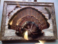 Choosing The Best Turkey Call - HuntingTopic Taxidermy Decor, Taxidermy Display, Turkey Fan, Wild Turkey, Turkey Mounts, Turkey Calling, Deer Mounts, Barn Wood Crafts, Deer Hunting