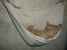 Pelíšek pro kočku ze staré kapuce / Hammock for cat made of old hood. #cat #hammock #DIY #hood #bed #recycled