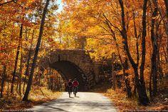 #Acadia #National #Park Autumn Leaves!