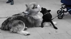 True love in while walking in Vienna found these two young lovely dogs playing with each other awesome. Chat Board, Vienna, True Love, Scary, Group, Dogs, Fun, Animals, Real Love
