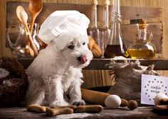 What's In Your Dog's