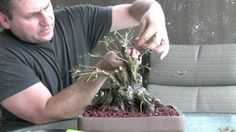 How To Bonsai - Make a Bonsai Tree