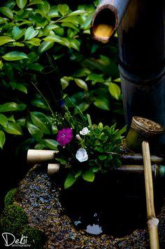 Japanese Traditional Water Basin at Fundain Temple, Kyoto, Japan
