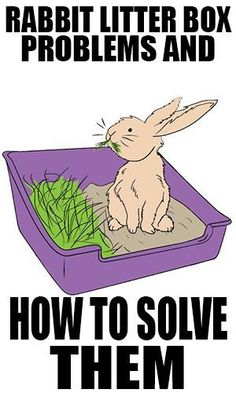 Rabbit litter box problems and how to solve them