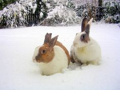 these bunnies make me want snow