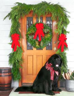 Christmas Forest Products maybe front door garage? Welcome To Christmas, Christmas Mail, Christmas Front Doors, Christmas Holidays, Christmas Crafts, Christmas Ornaments, Holiday Festival, Christmas Pictures, Xmas Decorations