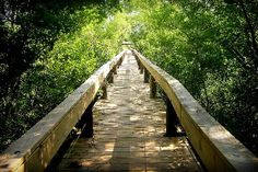Looking for a place to go running? The Fort Worth Nature Center & Refuge features an eight-mile running trail plus another 25 miles of hiking trails. It was designated a National Natural Landmark in1980.